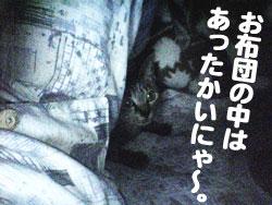 Photos: 051016-お布団は暖かいにゃ~
