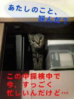 051009-【猫写真】物入れ探検で忙しいにゃ!