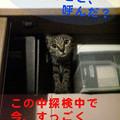 Photos: 051009-【猫写真】物入れ探検で忙しいにゃ!