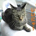 Photos: 051030-1【猫写真】所変わっても