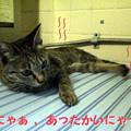 051019-【猫写真】肌寒くにゃってきたにゃ!