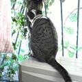 Photos: 051025-【猫写真】お気ににゃポイント