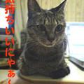 Photos: 051030-2【猫写真】所変わっても