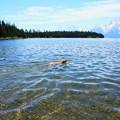 Jackson Lakeの夏。。