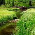 写真: 夏のSilver Lake
