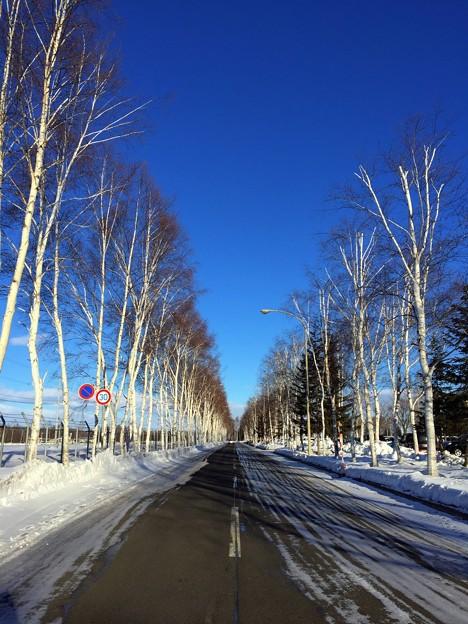 青空・一本道・シラカバ並木