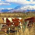 裏山と牛の見える風景