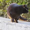 写真: 黒猫