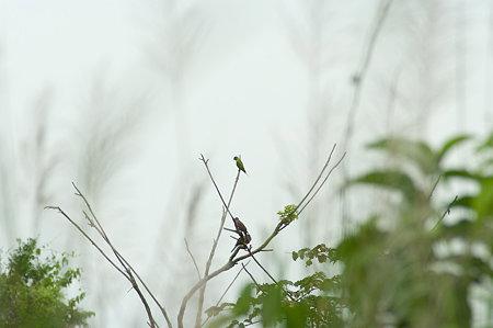 謎の野鳥 IMGP130963_R