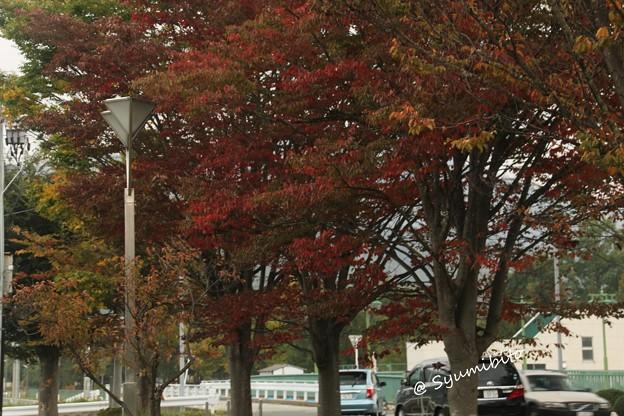 街路樹も秋の衣