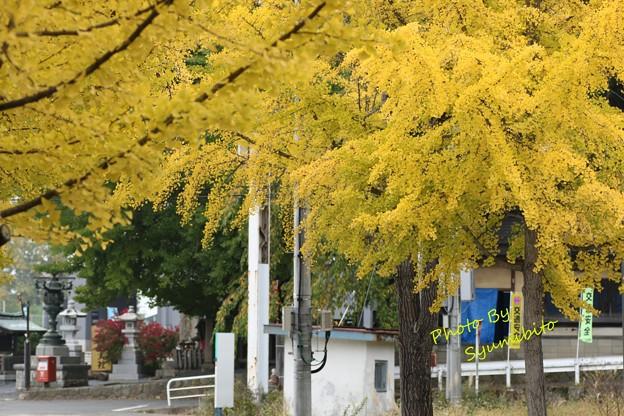 双松バラ園~熊野大社を望む