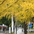 Photos: 双松バラ園~熊野大社を望む