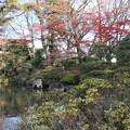 Photos: もみじ公園 2015年11月26日