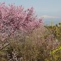 Photos: 蔵王山麓から月山を望む