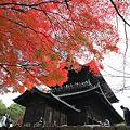『京の秋。。。』