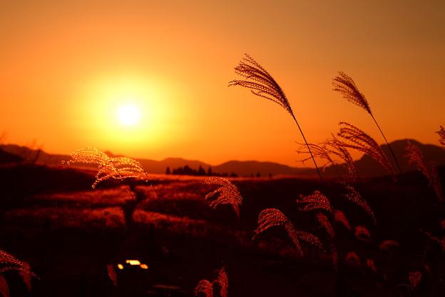 写真: 『秋風の靡き。。。』