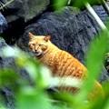 写真: 日比谷公園の猫