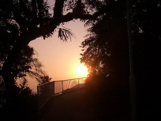 写真: 木々から望む朝焼け