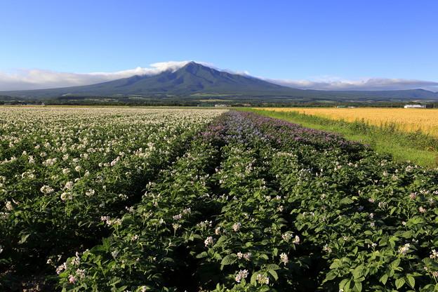 北海道風景2014_45
