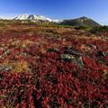 写真: 日本一早い紅葉を求めて 2