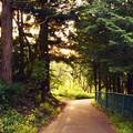 夕方の坂道