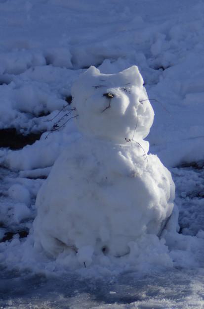 1月19日、雪クマ