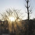 Photos: 3月3日、朝日に輝く川霧