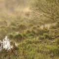 写真: 3月29日、朝霧の落合川(4)