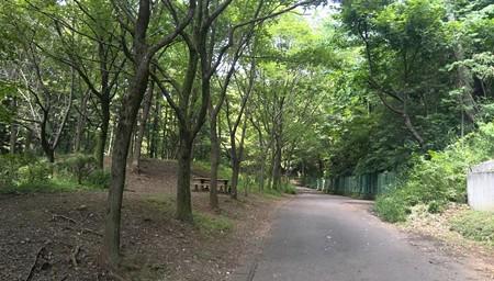 トトロの森 3号地