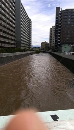 台風直後の境川@町田。