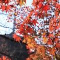 Photos: 紅葉と塔