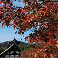 Photos: 秋空に