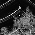 Photos: 晩秋の塔