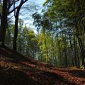 冬晴れの竹林