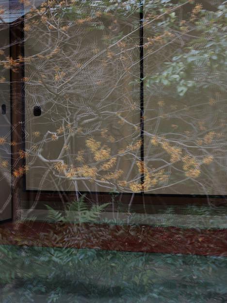 ガラスに映った春