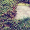 苔と石のコラボ