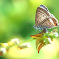 Photos: Sunshine with butterfly