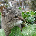 Photos: 猫のとらちゃんでした