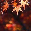 Photos: 穏やかな光と紅葉-C
