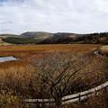 写真: 湿原の秋