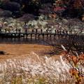 写真: 秋を歩く♪