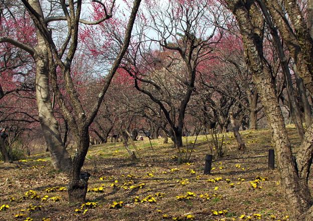 写真: 春の競演