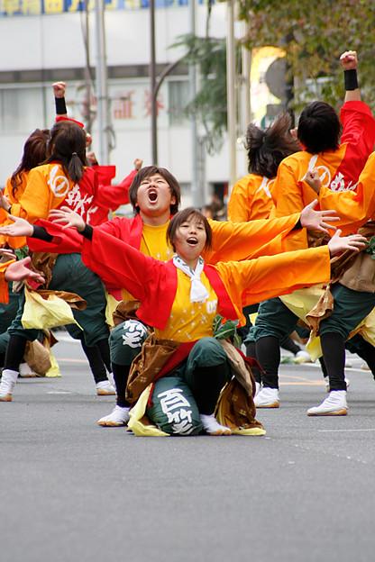 Photos: 東京農業大学よさこいソーラン同好会 百笑_08 - 第10回 東京よさこい