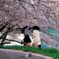 Photos: 弾ける