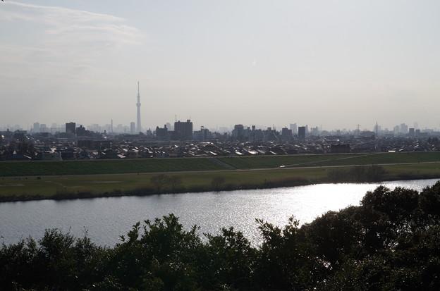 里見公園(遠景)