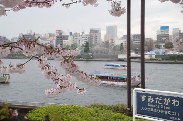 隅田公園 (4)