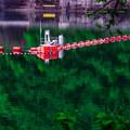 Photos: 緑の湖に…