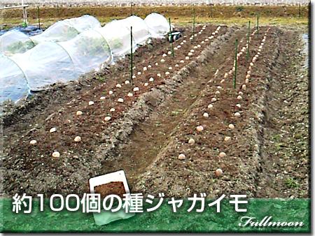 04種ジャガイモ