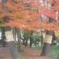 Photos: 大宮公園の秋
