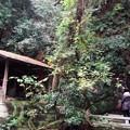 等々力渓谷の不動の滝とお稲荷さん